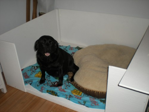 In my whelping box....would prefer Kim's bed!