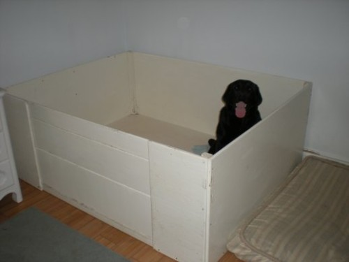 Yupe its me...alone...in my box....where are the puppies?