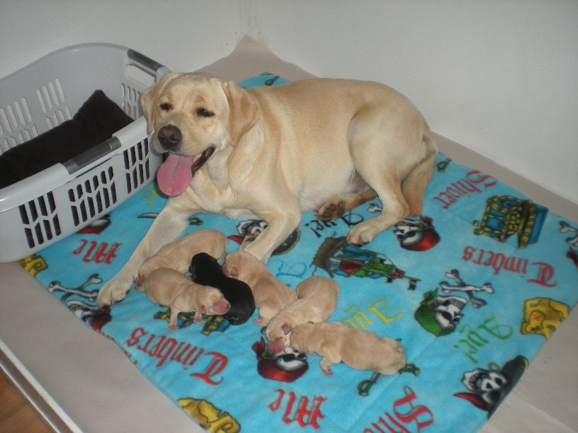 Happy Mabel with her new puppies