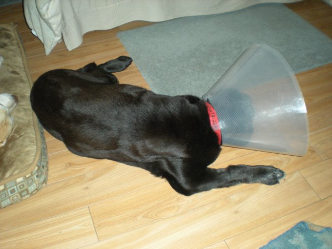 The cone was not her favourite new thing about 2010