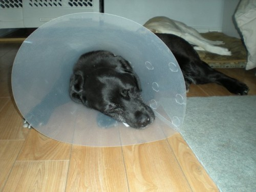 Colleen and the Cone of Silence-post eye surgery Jan 2010