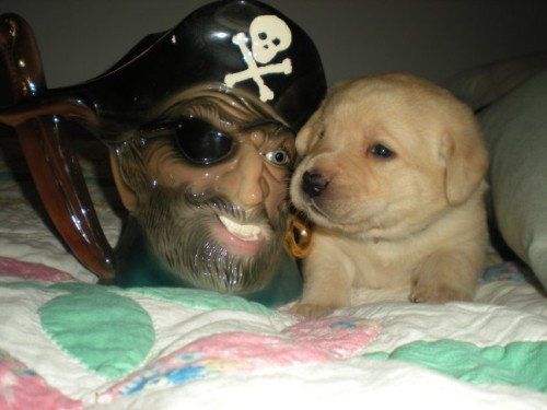 Yo Ho Ho, a Pirate!