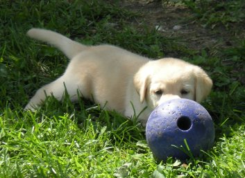 If only I could catch this darn ball....