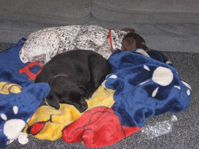Lola asleep with her new canine sister