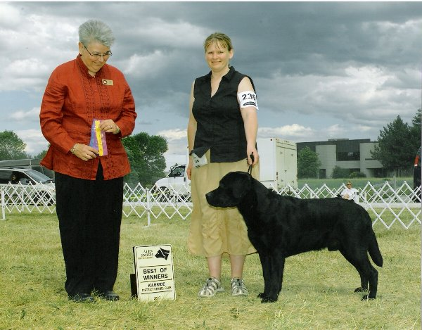 Pirate's Blk Powder Pistol-'Magnum', 4pt BW under breeder/judge Joyce Love-Rickways  Owner/handler: Terri Cross