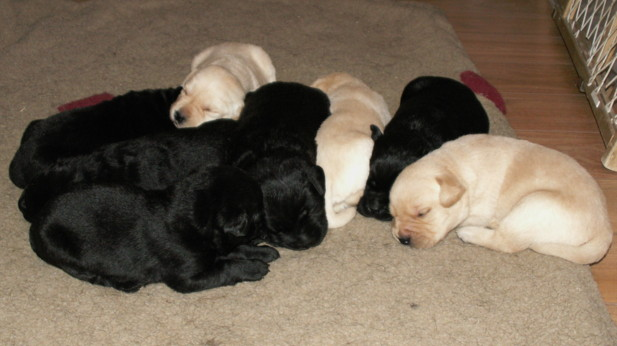 The gang at 2 weeks of age.