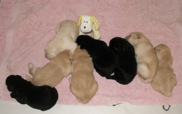 2 Weeks old and their stuffed dog
