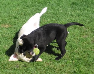 'Lucy' and 'Jessi' playing