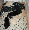 See that yellow puppy? He is always trying to crawl under the nightable! LOL