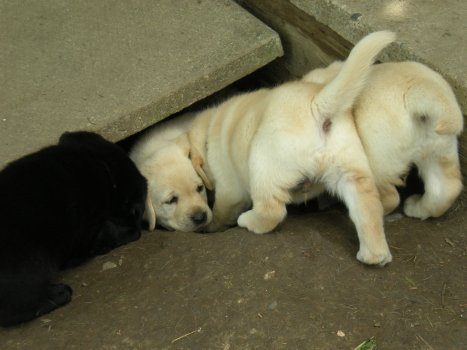 How many puppies can fit in the hole(management is not amused at the hole)