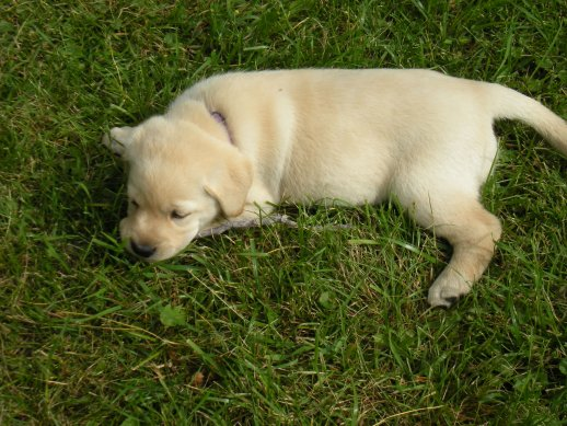 Snoozing on the grass