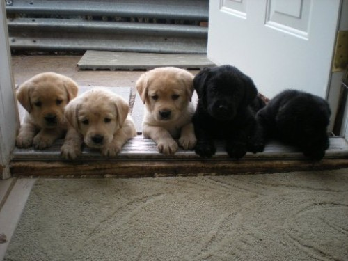 We want in!