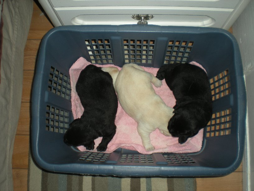 A basket full!