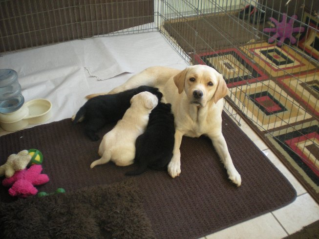 Happy Mom and kids!