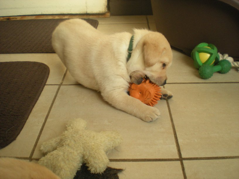 Putting a hurt on that orange sqeeky toy