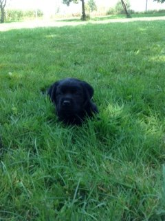 The black girl relaxes in the grass