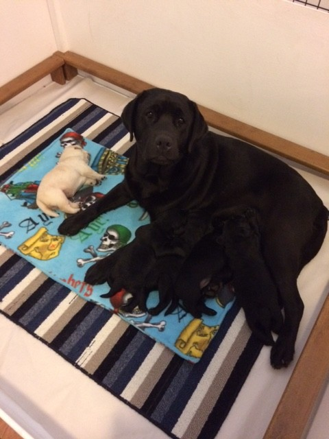 Darcy with her puppies