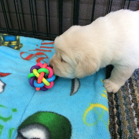 First toy!