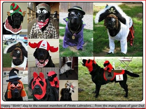 Ruger is also a champion master of disguises!